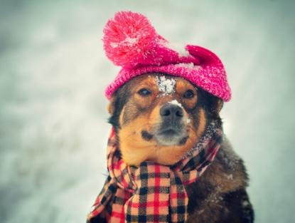 Climas-Frios-cachorro