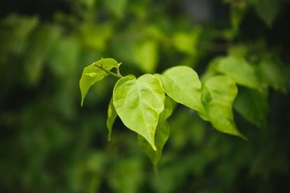 Reino-Plantae