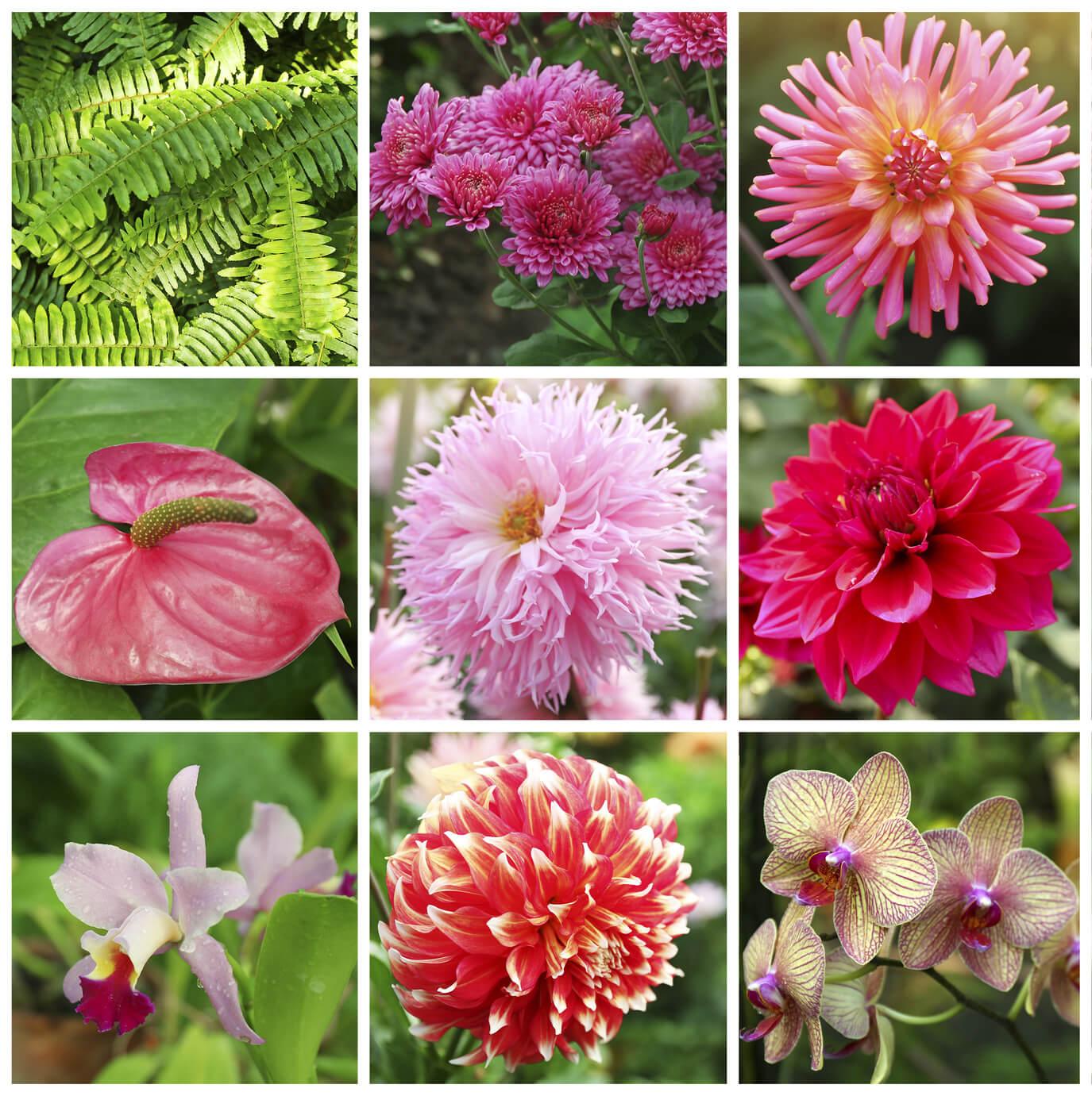 Plantas ornamentais conceito o que significado - Plantas que aguantan temperaturas extremas ...